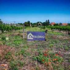 3260 - Na predaj stavebný pozemok v obci Moča okres Komárno za výhodnú cenu!